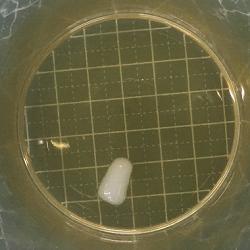 シリコーン樹脂・ポリアミド樹脂