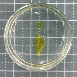 ポリイミド樹脂・ポリアミドイミド樹脂溶解剤