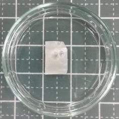 硬化後ウレタン接着剤原型